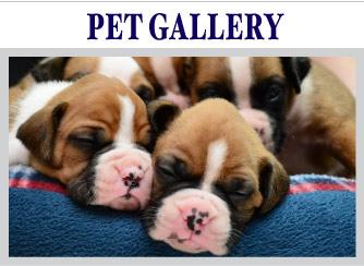 Pet Gallery