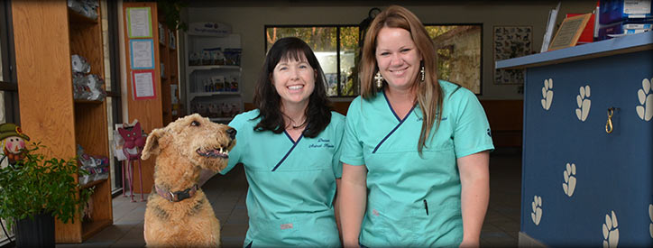 Get to know us at Deason Animal Hospital