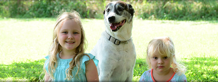 Our veterinarians take pride in providing the best animal care available
