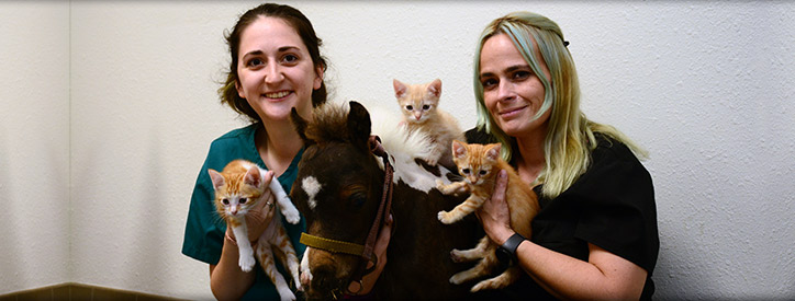 Meet the veterinarians at Deason Animal Hospital