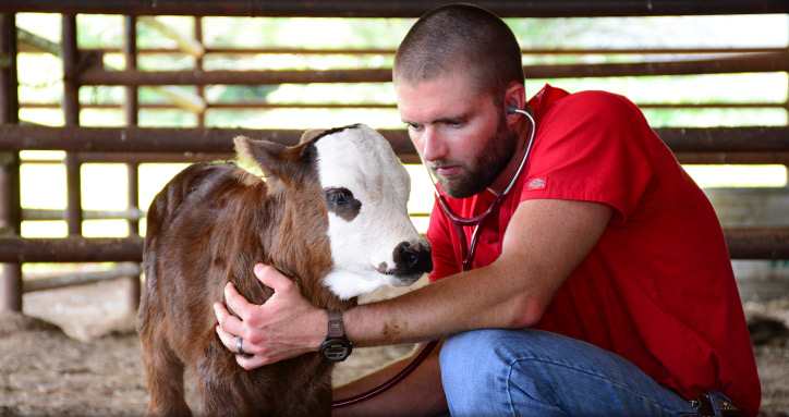 Cattle veterinarian in Floresville Texas