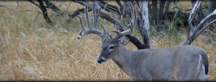 Deer veterinary care at Deason Animal Hospital
