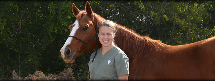 Reproductive management for horses at Deason Animal Hospital