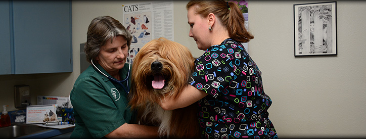 Senior dog veterinary care at Deason Animal Hospital