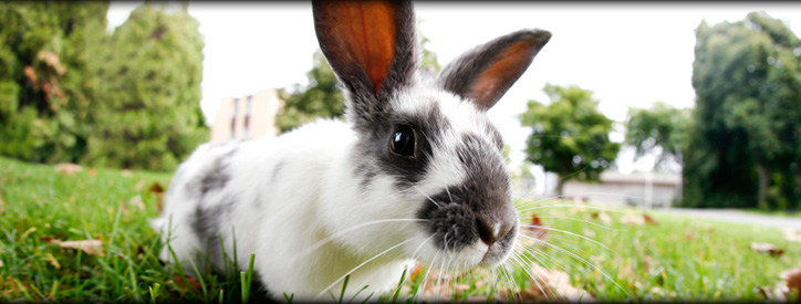 Rabbits, small mammals veterinary care at Deason Animal Hospital