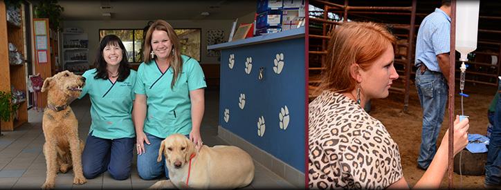 Staff at Deason Animal Hospital