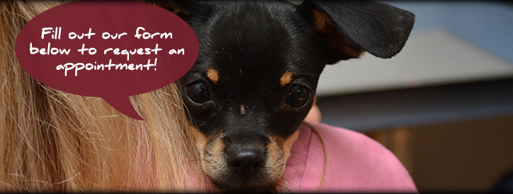 Request an Appointment at Deason Animal Hospital in Floresville, TX