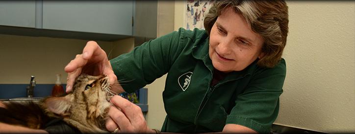 Cat Wellness Care, Floresville Vet, Animal Hospital Floresville