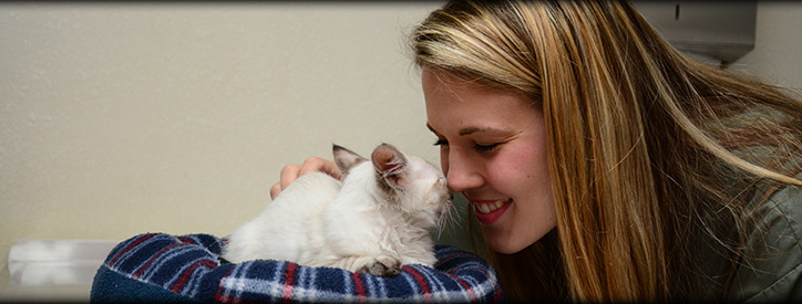 Cat Wellness Care Floresville Vet, Animal Hospital Floresville, TX