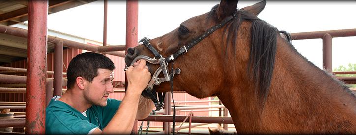 Equine Dental Care, Deason Animal Hospital, Floresville, TX
