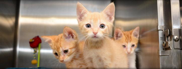 Kitten Health Care in Floresville, TX