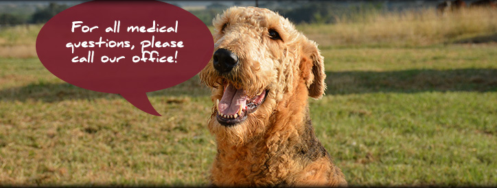 Educational Links from Deason Animal Hospital in Floresville, TX