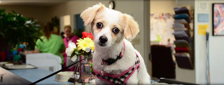 Pet Owner Resources
