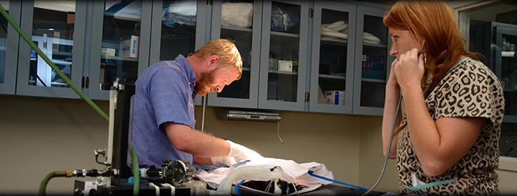 Dog Cat Surgery, Floresville Vet, Animal Hospital Floresville