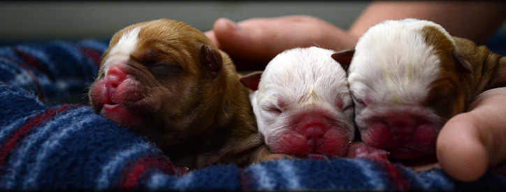 Puppy Veterinary Care at Deason Animal Hospital