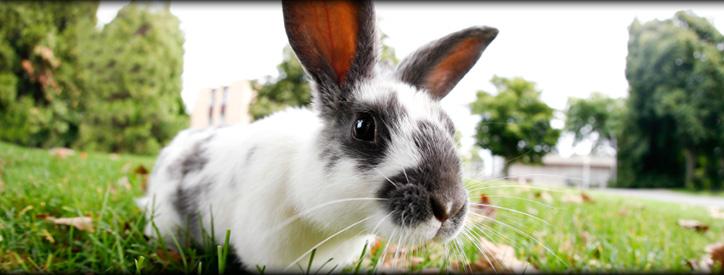 Small Mammal Care, Floresville Vet, Animal Hospital Floresville