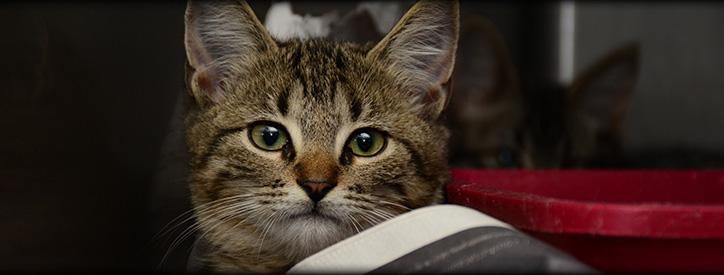 Dog Cat Vaccinations, Floresville Vet, Animal Hospital Floresville