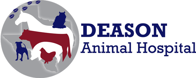 Deason Animal Hospital in Floresville TX